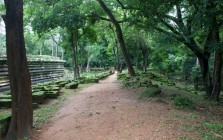 Forest in Angkor Wat