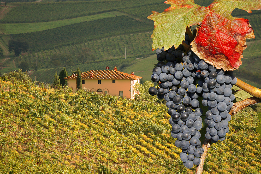 Top Coach Destinations for Wine Lovers