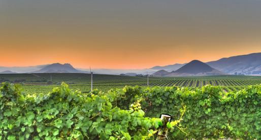 The Best Destinations for a Wine Tour