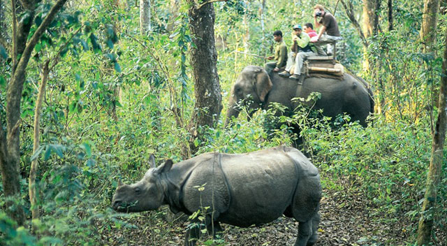 Chitwan_Elephant_ride_with_friends