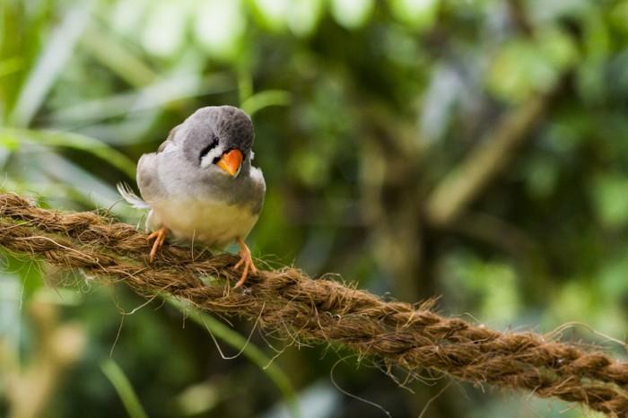 bird-647397_960_720