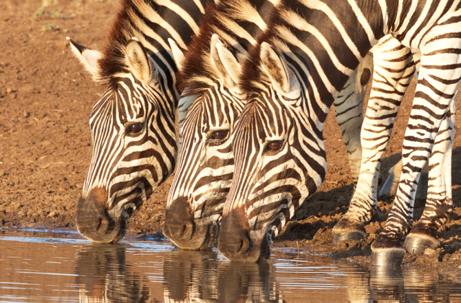 5 National Parks and Game Reserves You Must See in South Africa
