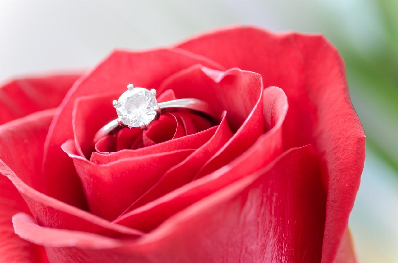 flower-rose-macro-nature-633857